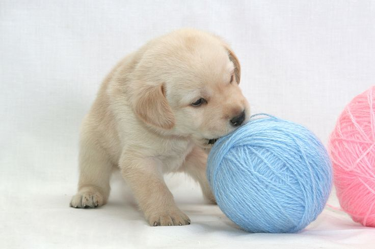 puppy - Google Search