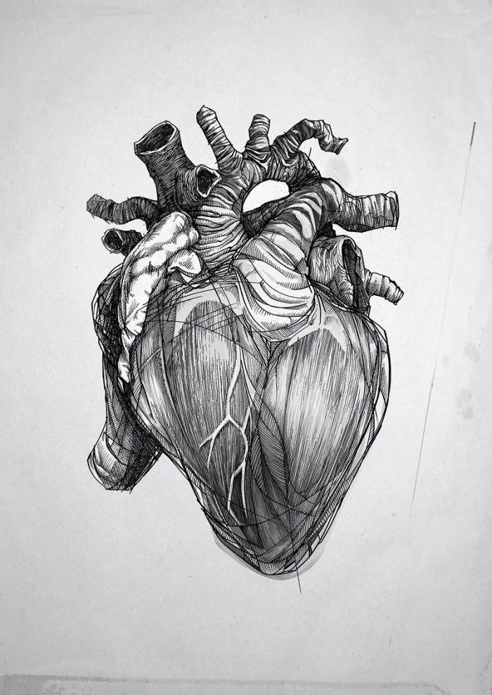 corazón anatomico dibujo - Buscar con Google