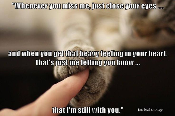 Keeping all the precious kitties I have ever loved, close within my heart!