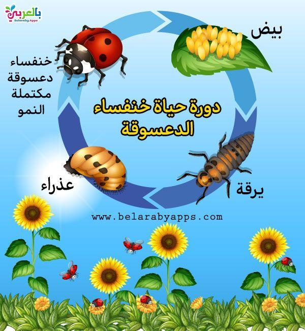 رسم دورة حياة الحيوانات للاطفال مراحل نمو الحيوان بالصور بالعربي نتعلم Animals 99c