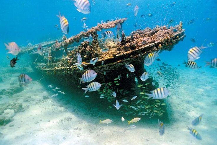 Must Do in Barbados | Atlantis Submarines Barbados in Bridgetown - My Destination Barbados