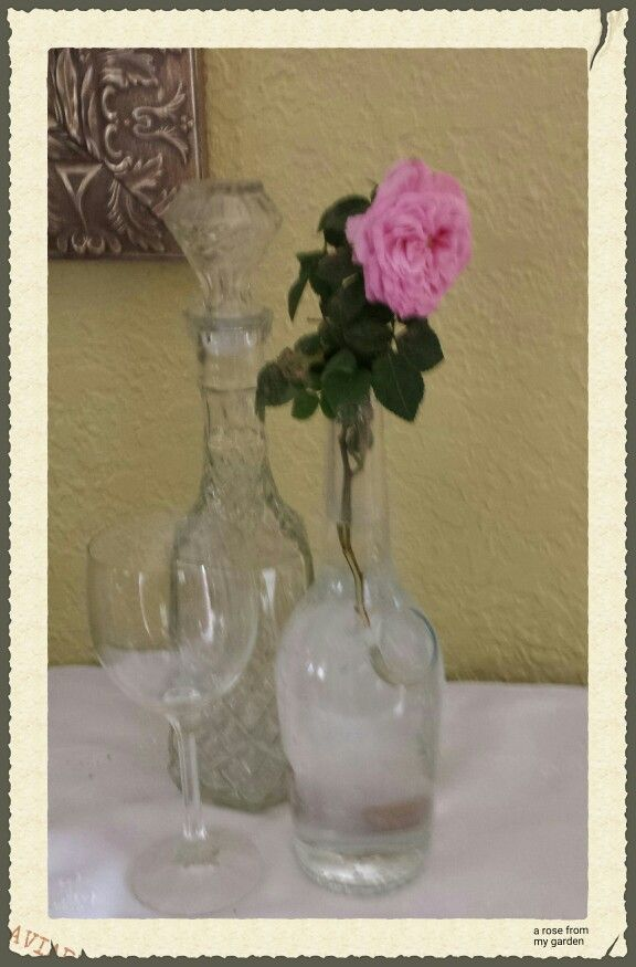 A pink little rose from the property. I used a Hennessy liquor bottle as a vase.