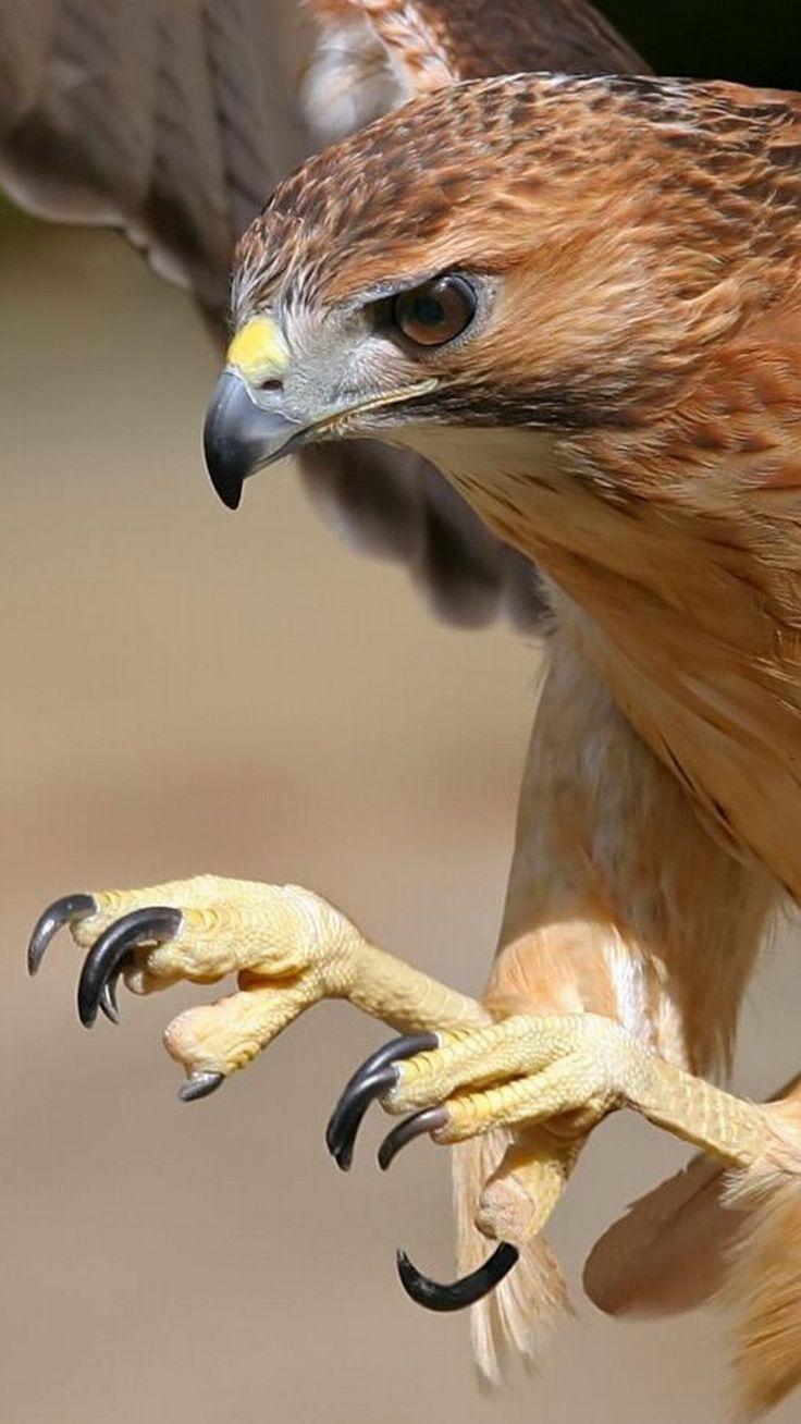 1080x1920 Wallpaper eagle, bird, predator, flight, wings, beak
