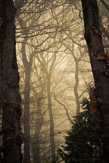 Into the woods by Alexander Ipfelkofer on Flickr.
