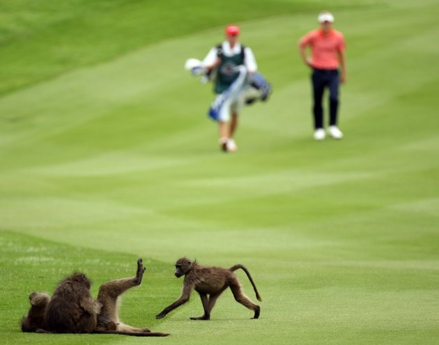 Luke Donald of England and his caddie walk towards monkeys on the par four 3rd hole during the first round of the Nedbank Golf on the Gary Player Course on November 29, 2007 in Sun City, South Africa.