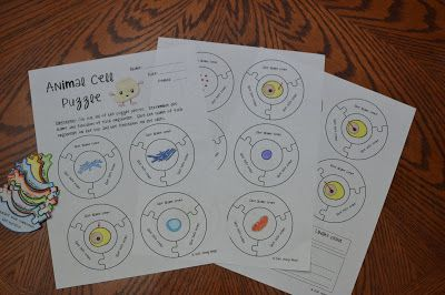 Math in Demand: Animal Cell Activity