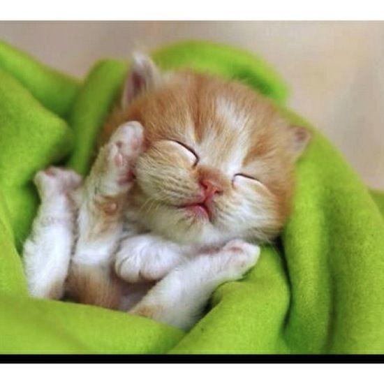 Baby orange kitten...Photographer: Jean-Michel Sotto