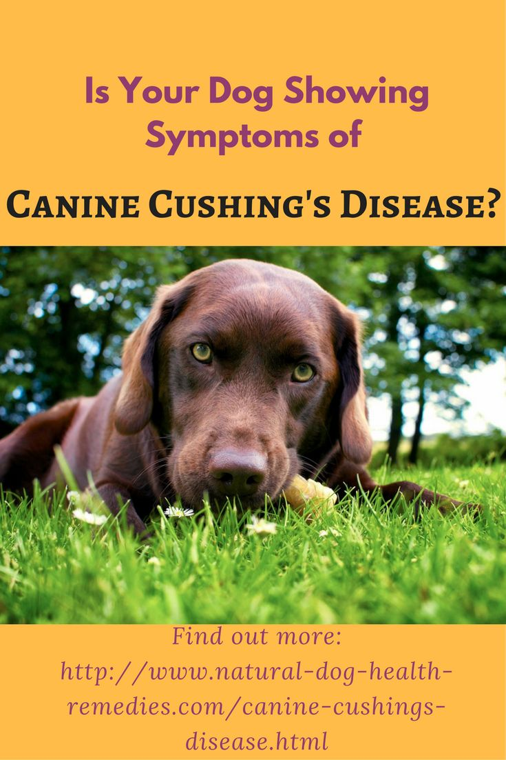 How To Treat Cushing S Disease In Dogs Naturally