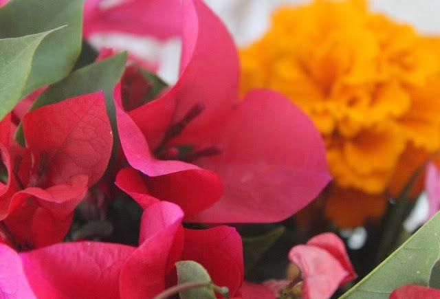 Las flores más bonitas del mundo | Flor de Capomo