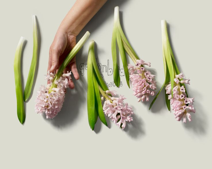 Gardenbird Flowers | Art Direction & Photography | Lynda Evans