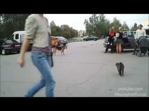 In Soviet Russia, cat attacks dog Poor goggie :-(
