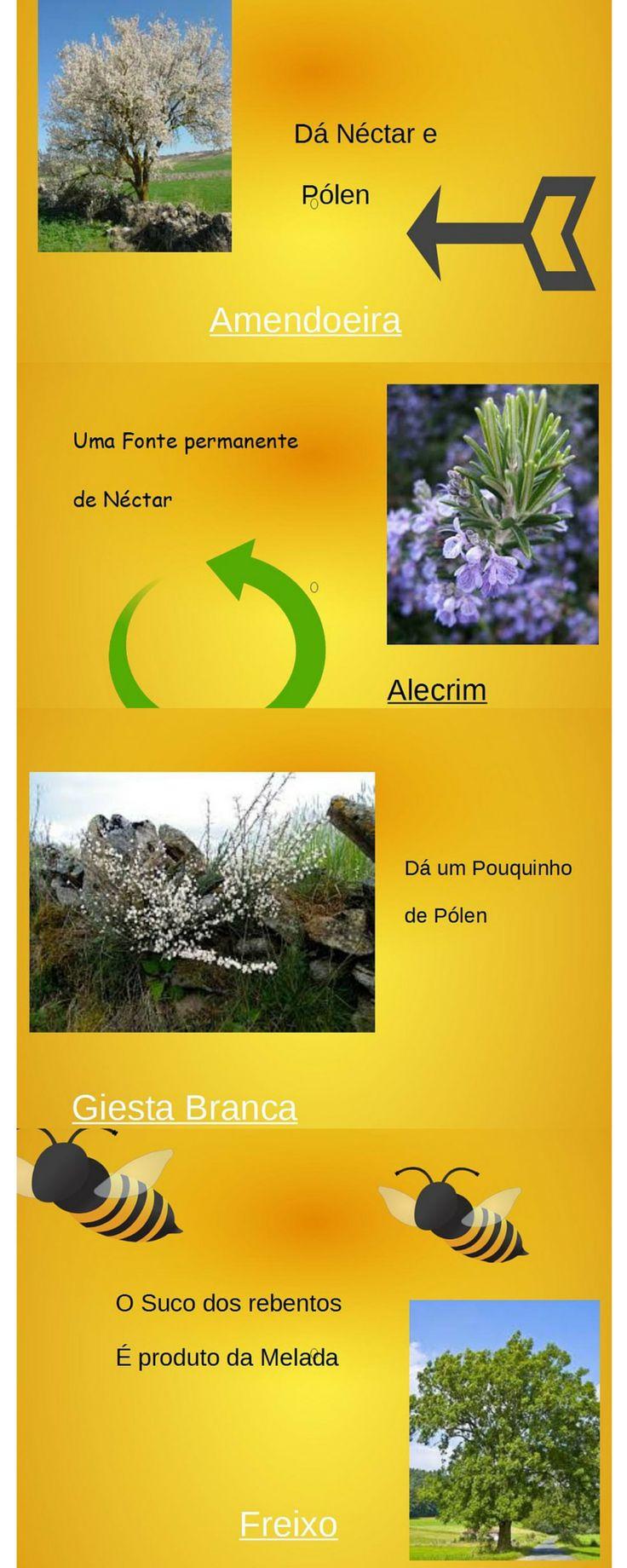 A flora para um apiario http://apicosta.com