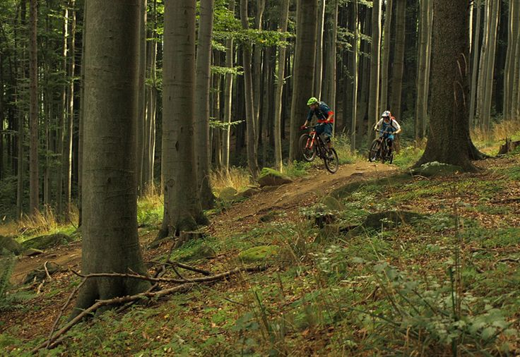 Downhill ride on professional tracks - Easy - Enjoy the nature passing by on the mountain bike track.