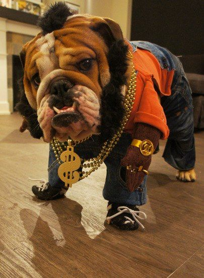 335 best Bulldogs images on Pinterest | Animals, Bull dog and ...