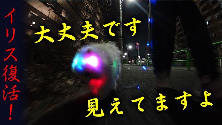 夜のお散歩にはイリスです 大丈夫です見えてますよ。 イリス開発秘話 【復活】