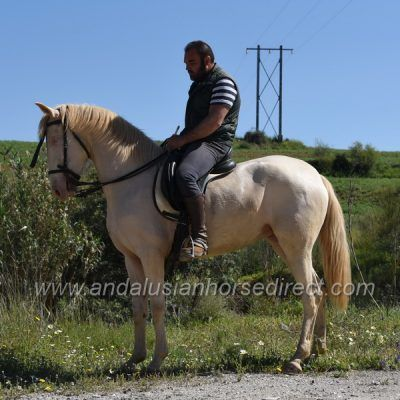 Riesige Pferde