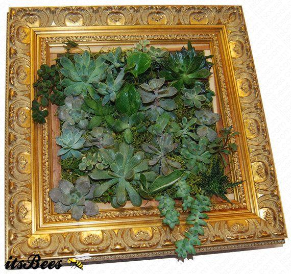 14 Gold Framed Vertical Succulent Wall Garden All di ItsBees