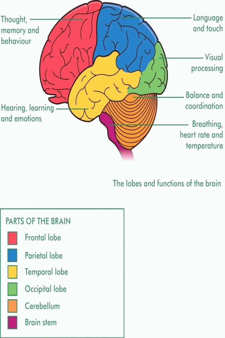 Brain Diagram With Functions Nervous System Structure ...