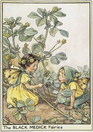 Illustration for the Black Medick Fairies from Flower Fairies of the Wayside. A small girl fairy kneels on the left facing a small boy fairy who kneels facing her. She points at the seeds of the black medick flower.    Author / Illustrator  Cicely Mary Barker