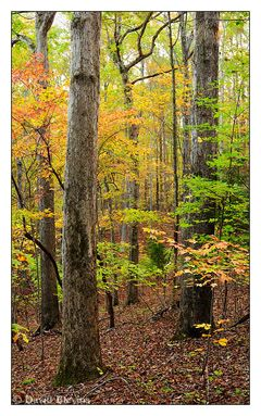 4082 Best Back Roads Images On Pinterest Res Life Country Life And Country Living