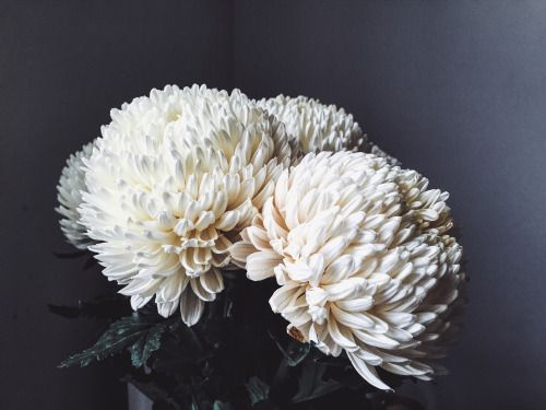 White flowers you can find in supermarkets and make very affordable bouquets at home