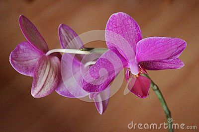 Background with beautiful pink orchids