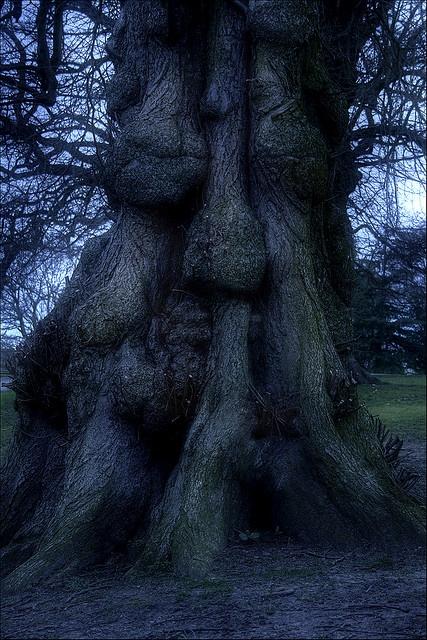 Ssshhh Sleeping Tree by mliebenberg, via Flickr