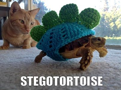 Stegotortoise. In related news...I think I'm getting a turtle and learning how to knit...
