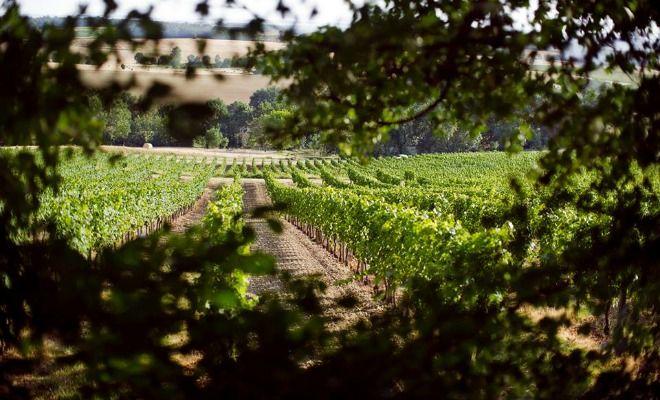 Une interprofession des vins de Bergerac et de Duras vient de naître. Ce service agit sur les champs économique, technique et promotionnel des deux vignobles.