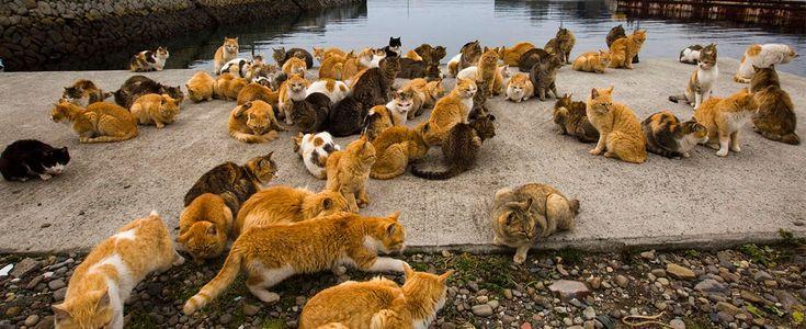 9 sitios en Japón para disfrutar de la compañía de los animales