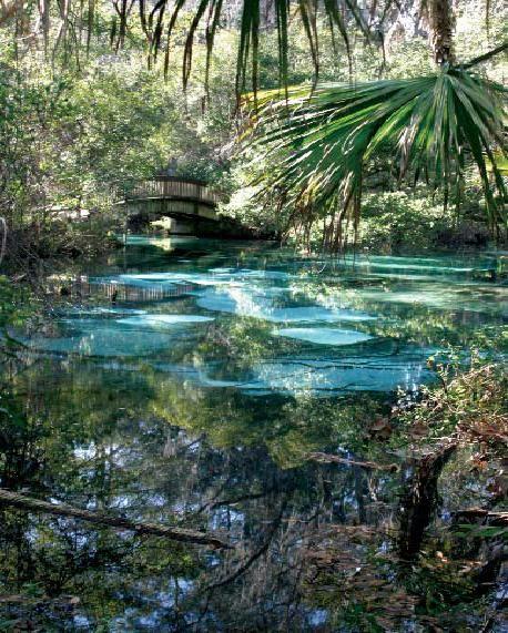 fern hammock springs   marion county florida 40 best fern hammock springs images on pinterest   ferns hammock      rh   pinterest