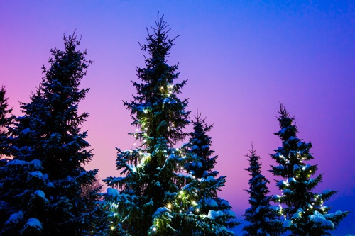 by Ann-Kristina Al-Zalimi, Christmas trees, christmas, lights, christmas tree, sundown, evening colors, winter, talvi, joulu, ilta, sininen hetki, jouluvalot, christmas lights, fine art photography
