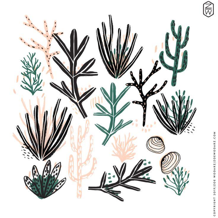 nautical, coral, ocean, illustration