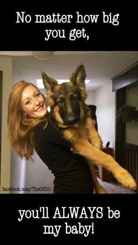 """This is what my 5' 110 lb. Wife says and does to my two GSD's. #1=121lbs, #2= 103lb. I'm 6'1"""" and I don't pick them up. She has been spoiling my dogs for years."""