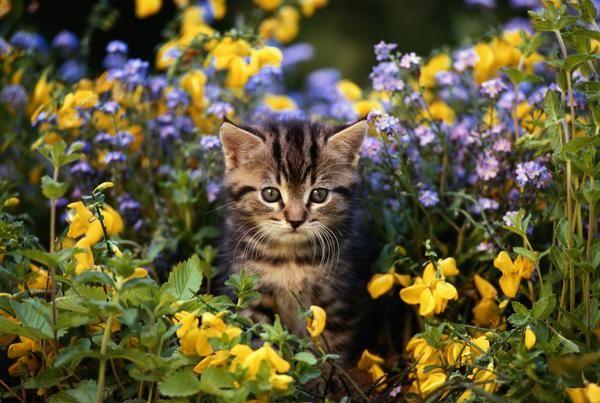 katzen vom garten vertreiben ultraschall