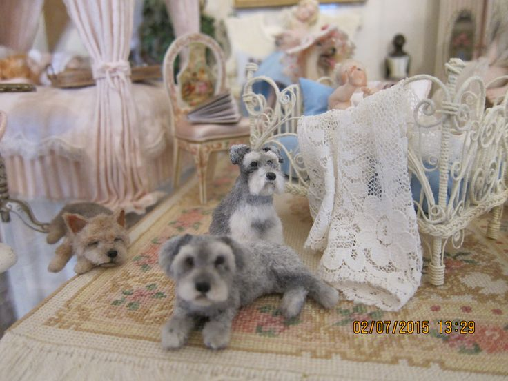 Reve's adorable terriers in one of my bedrooms! A sleeping yorkie, a mini schnauzer, a shnoodle. Love them! Louise Glass