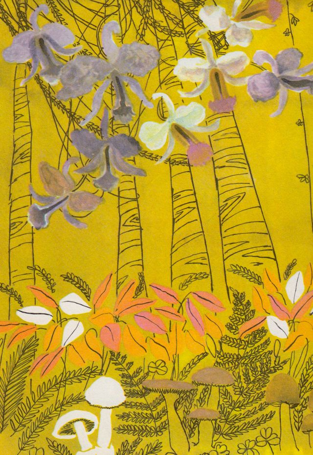 The True Book of Jungles by Illa Podendorf, illustrated by Katherine Grace (1963)
