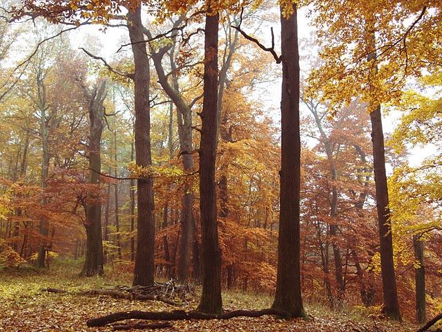 glorious fall...