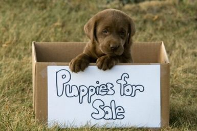 Bans on Pet Shops Pets Sales Info: Many municipalities in the U.S. now ban the sales of pets for profit in pet stores, at flea markets and other outlets.