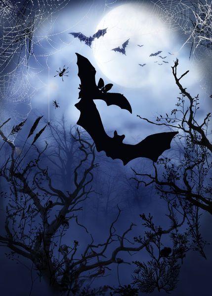 Hariette H. - Midnight