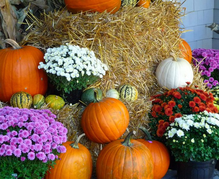 Pumpkins And Mums Seasons Autumn Pinterest Trees