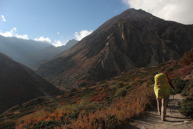 Невероятные краски осени в Гималаях. Где-то по дороге на Як Кхарку, когда уже приближаешься к перевалу Торонг Ла. Это ключевая точка маршрута вокруг Аннапурны. Хотя там всё ключевое. Горы, кустарники, реки, эти огромные пейзажи. Яки, иногда греющиеся на солнышке прямо перед вами. Чем не большие котики? Дождей почти не бывает в это время года, видимость потрясающая. Это одна из самых незабываемых прогулок в жизни.  Фото: Евгений Ишин  С уважением к приключениям, команда hikeup.net