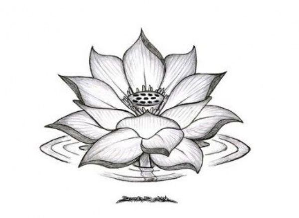 42 Simple And Easy Flower Drawings For Beginners Cartoon District Lotus Flower Drawing Pencil Drawings Of Flowers Flower Drawing