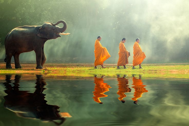 buddhist monks walking with elephant
