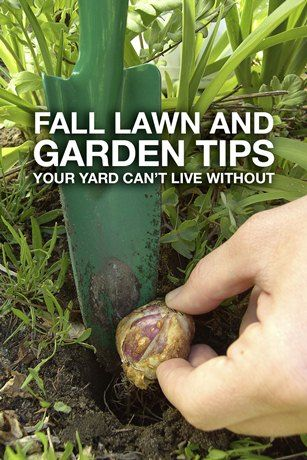 Get your lawn and garden back in shape and ready for winter with this list of fall lawn care tips.