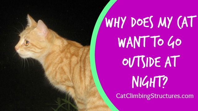 Why Does My Cat Want To Go Outside At Night It S Not Safe Cat