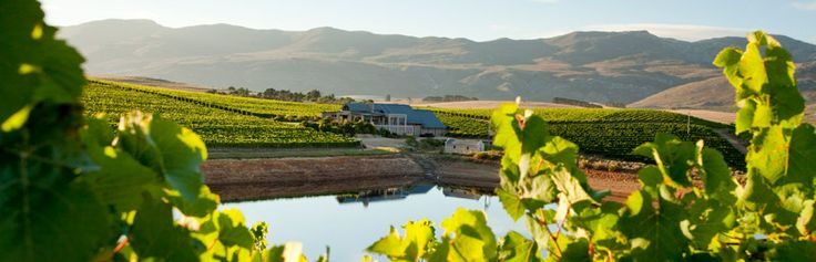 Creation Wines Hermanus