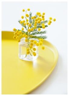 mimosas by Claire Curt, Art de vivre, Décoration