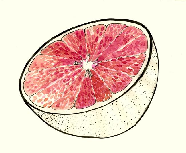 Chelsea Cardinal   Grapefruit Illustration
