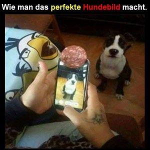 Das-perfekte-Hundefoto